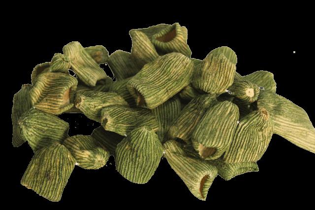 zucchini-transparent